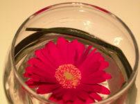 グラスの水に浮かぶ赤い花