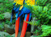 虹色のオウムの夫婦