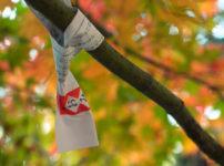 秋の風景とおみくじがぶら下がる枝